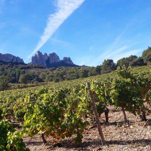 Gigondas vineyard